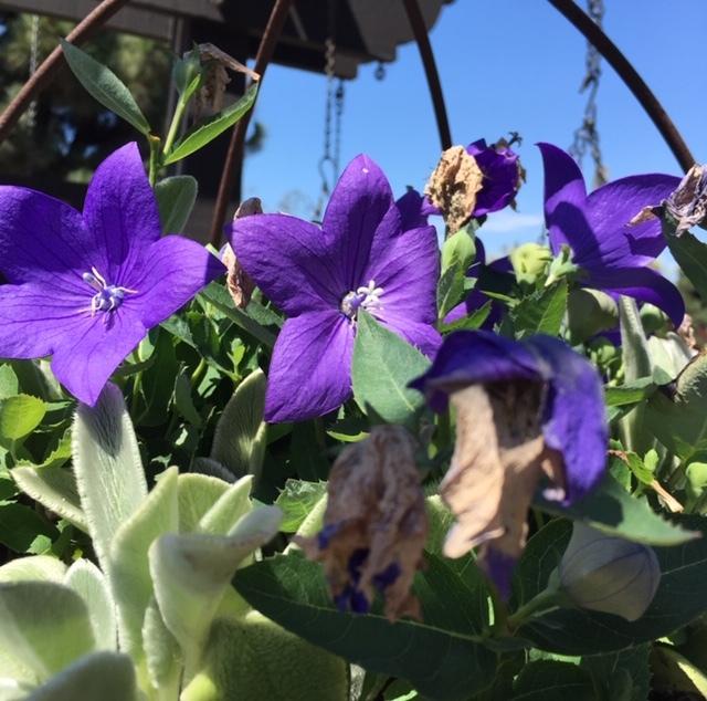 Roger\'s Gardensで秋の庭の準備_e0350971_14282698.jpg