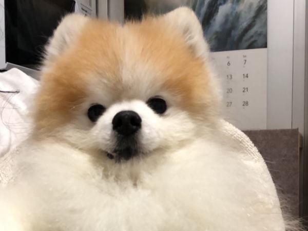 犬の脳炎_a0300884_21543702.jpg