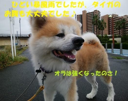 f0121712_15290583.jpg