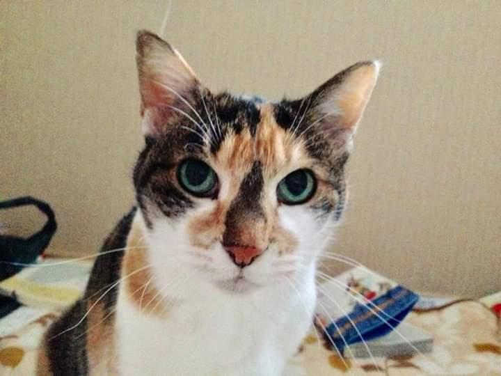 ひろ1(猫)_e0099019_19554280.jpg