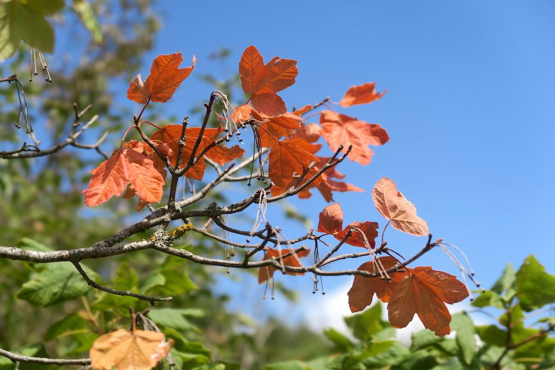 秋色と見晴らしきれいなチェトーナ山、トスカーナ_f0234936_712555.jpg