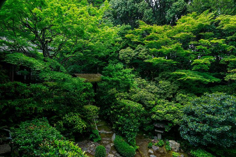 新緑の桂春院_f0155048_0315935.jpg