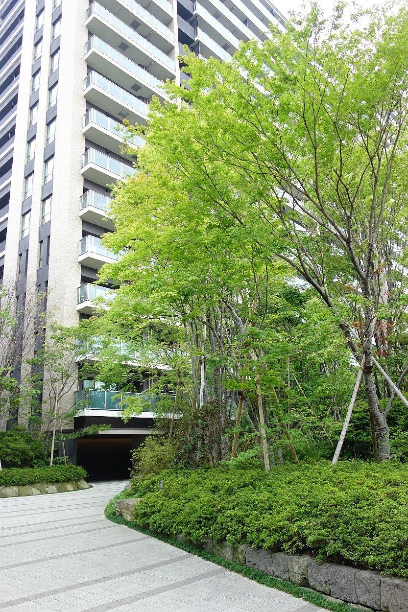 福岡市の浄水通りから平尾へ_c0112559_10172946.jpg