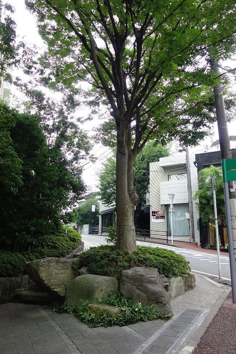 福岡市の浄水通りから平尾へ_c0112559_10194785.jpg