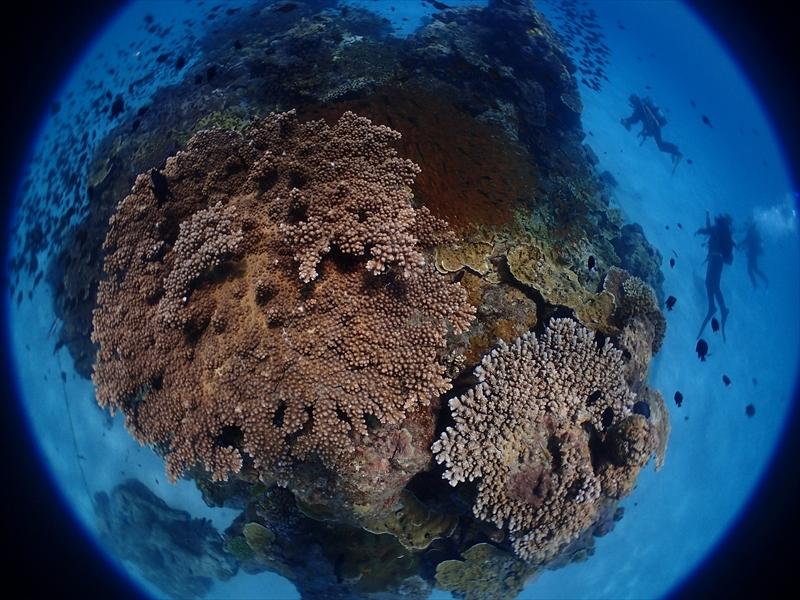 太平洋側は若干ウネリ入ってきてました_d0053180_16183443.jpg
