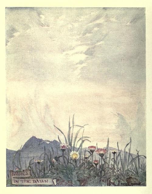 Maxwell Armfield画:The flower book①_c0084183_11080550.jpg