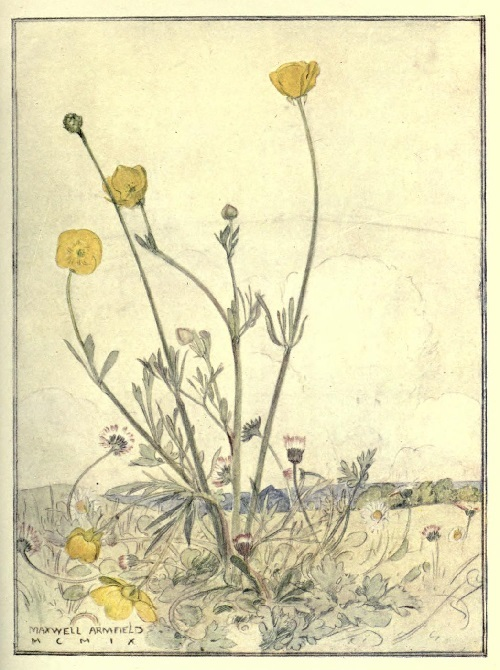 Maxwell Armfield画:The flower book①_c0084183_11090422.jpg