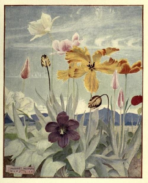 Maxwell Armfield画:The flower book②_c0084183_19265358.jpg