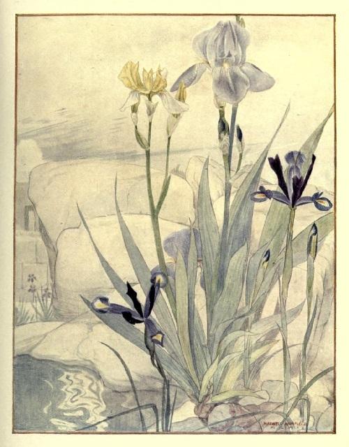 Maxwell Armfield画:The flower book③_c0084183_20090443.jpg
