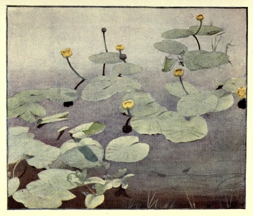 Maxwell Armfield画:The flower book③_c0084183_20091527.jpg