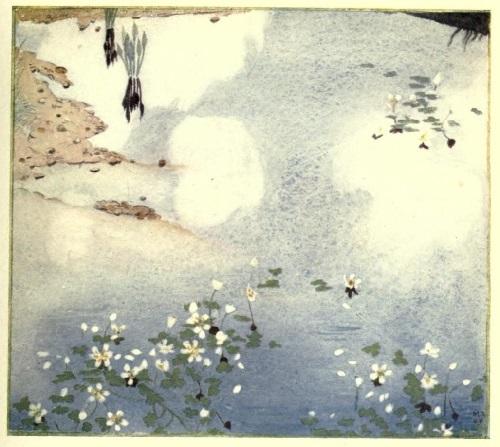 Maxwell Armfield画:The flower book③_c0084183_20092926.jpg