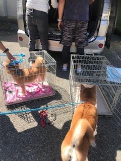 【犬・移動先募集】センター(支所)収容(9/12訪問)_f0242002_15272761.jpg