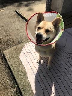 【犬・移動先募集】センター(支所)収容(9/12訪問)_f0242002_15362134.jpg