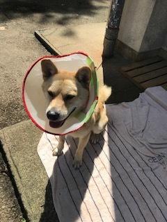 【犬・移動先募集】センター(支所)収容(9/12訪問)_f0242002_15362662.jpg