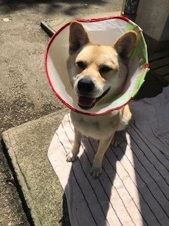 【犬・移動先募集】センター(支所)収容(9/12訪問)_f0242002_15363152.jpg