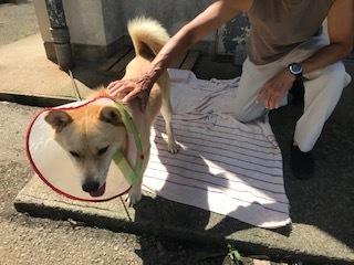 【犬・移動先募集】センター(支所)収容(9/12訪問)_f0242002_15363891.jpg