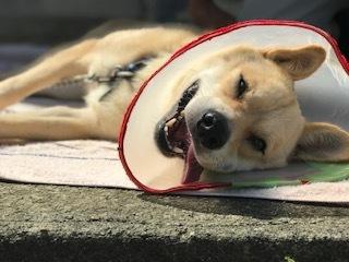 【犬・移動先募集】センター(支所)収容(9/12訪問)_f0242002_15533124.jpg