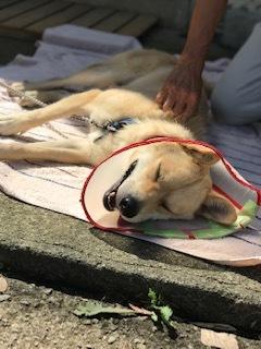 【犬・移動先募集】センター(支所)収容(9/12訪問)_f0242002_15533717.jpg