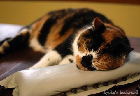 枕はやっぱりこれじゃないと_b0253205_07042383.jpg