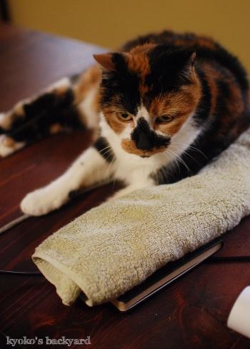 枕はやっぱりこれじゃないと_b0253205_07045468.jpg