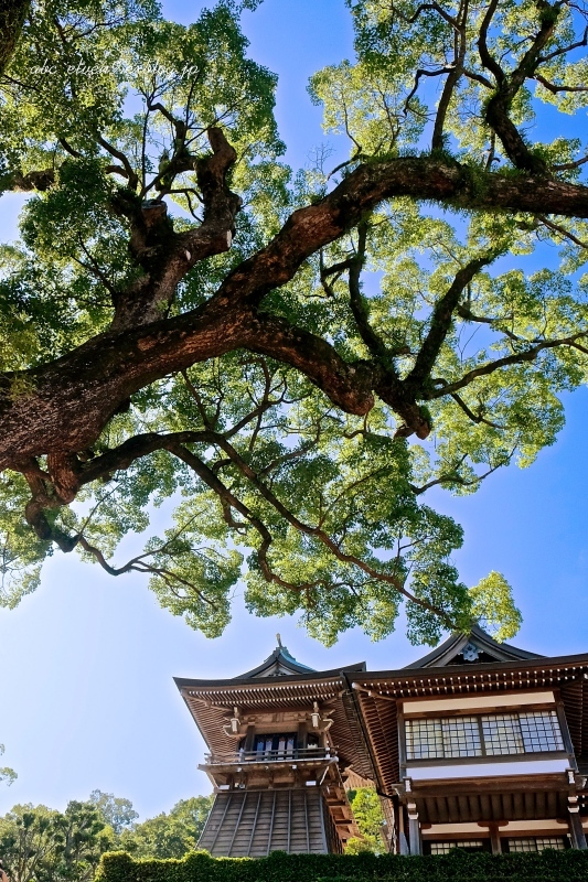 諏訪神社太鼓楼_f0315034_16433232.jpg