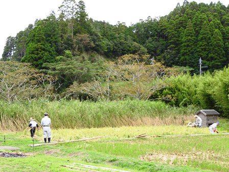 モチ田の稲刈り_a0123836_09484690.jpg