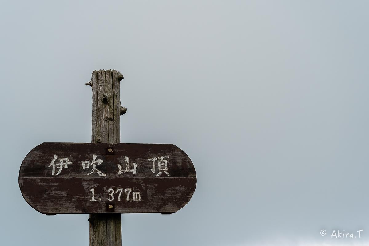 伊吹山 -2-_f0152550_22114829.jpg