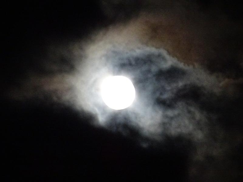 中秋の名月「観月会」・・・孝子の森_c0108460_23490719.jpg
