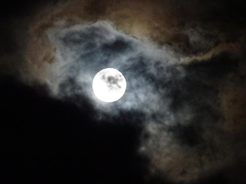 中秋の名月「観月会」・・・孝子の森_c0108460_23492315.jpg