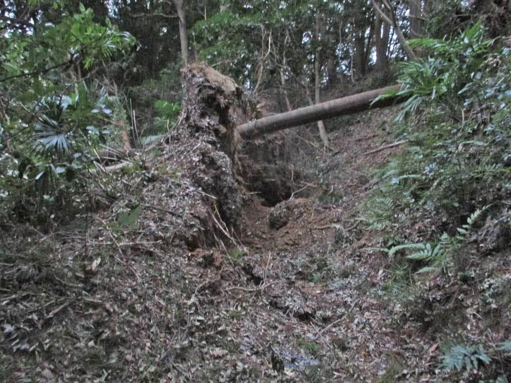セロー225Wの練習場所である裏山のプチ林道が全滅・・・(T_T)_c0086965_18103717.jpg
