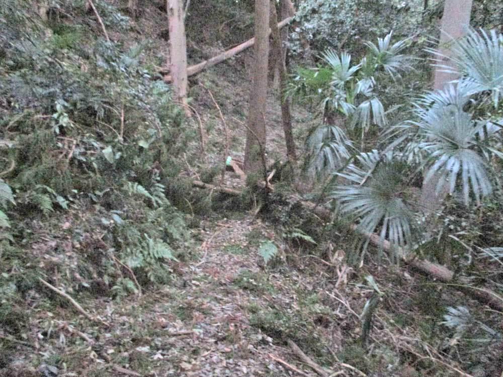 セロー225Wの練習場所である裏山のプチ林道が全滅・・・(T_T)_c0086965_18103723.jpg