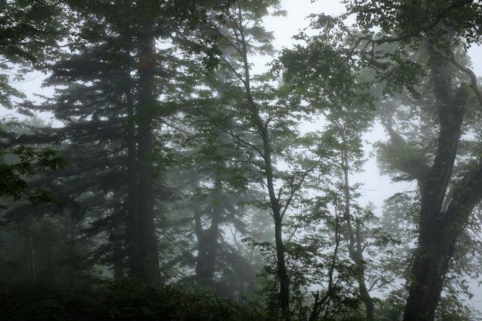 北海道11日目-1 羊蹄山登山_b0339488_19235626.jpg