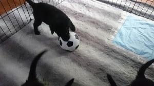 サッカーしよう_b0084194_19294110.jpg