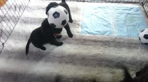 サッカーしよう_b0084194_19295187.jpg
