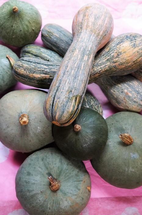 ■Myファーム収穫祭【昨年度の自家採り種から 今年も沢山の南瓜が採れてます^^/動物の被害】_b0033423_22001342.jpg