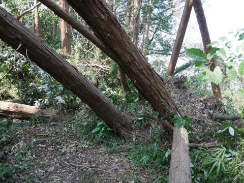 【台風15号の六国見山被害詳報】②スギの巨木群赤道に根こそぎ倒れる_c0014967_13190387.jpg