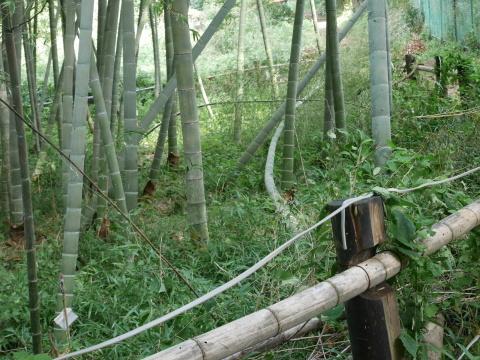 【台風15号の六国見山被害詳報】②スギの巨木群赤道に根こそぎ倒れる_c0014967_13301538.jpg
