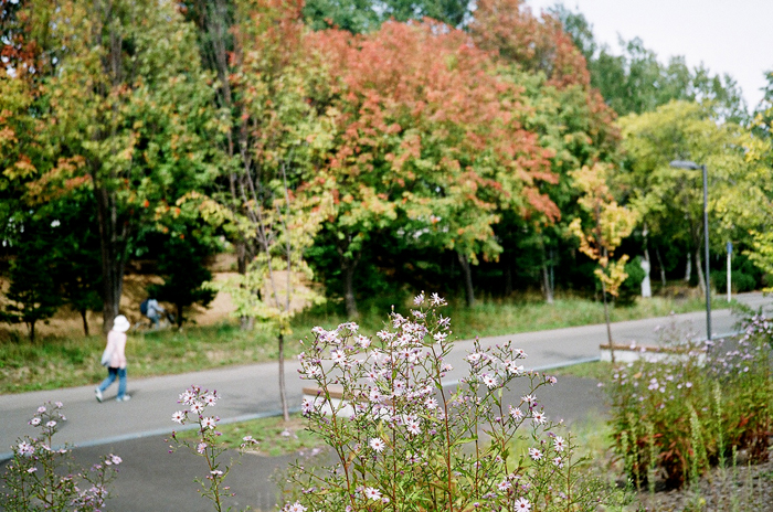 野菊とナナカマドの実とイチイの実とコスモス_c0182775_17245581.jpg