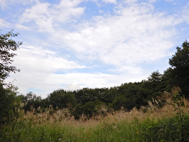 武川町F山さん邸の現場より 16_a0211886_17280083.jpg