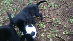 外サッカー_b0084194_20252862.jpg
