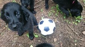 外サッカー_b0084194_20253520.jpg