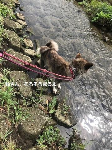 川散歩♪_f0242002_09014923.jpg