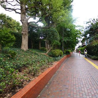 緑道のザクロの実とサルスベリの花_c0195909_16355069.jpg
