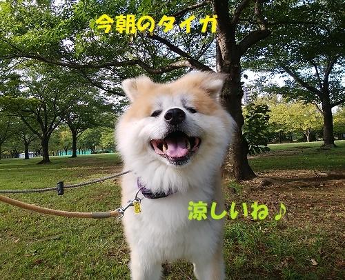 f0121712_13514248.jpg
