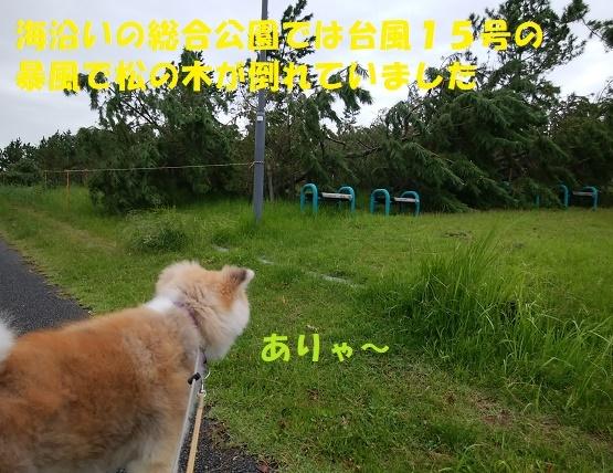 f0121712_13594104.jpg