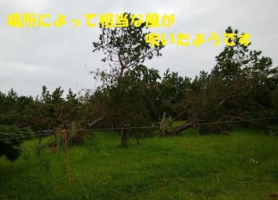 f0121712_14033819.jpg
