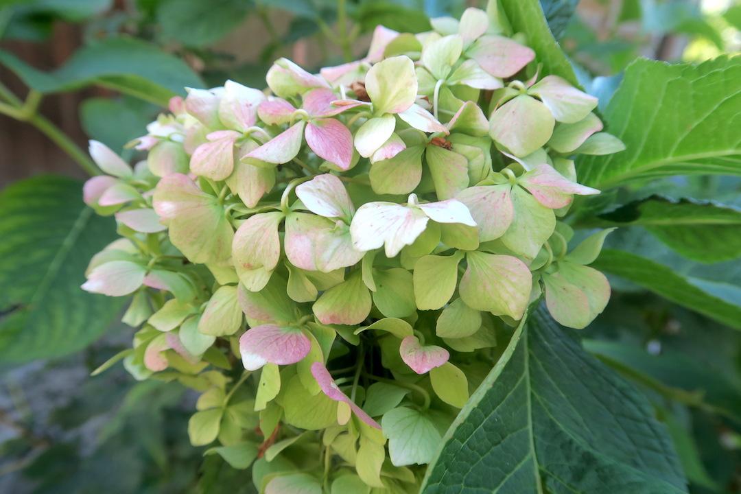 ラヴェルナの緑の森にも秋の足音_f0234936_5573561.jpg
