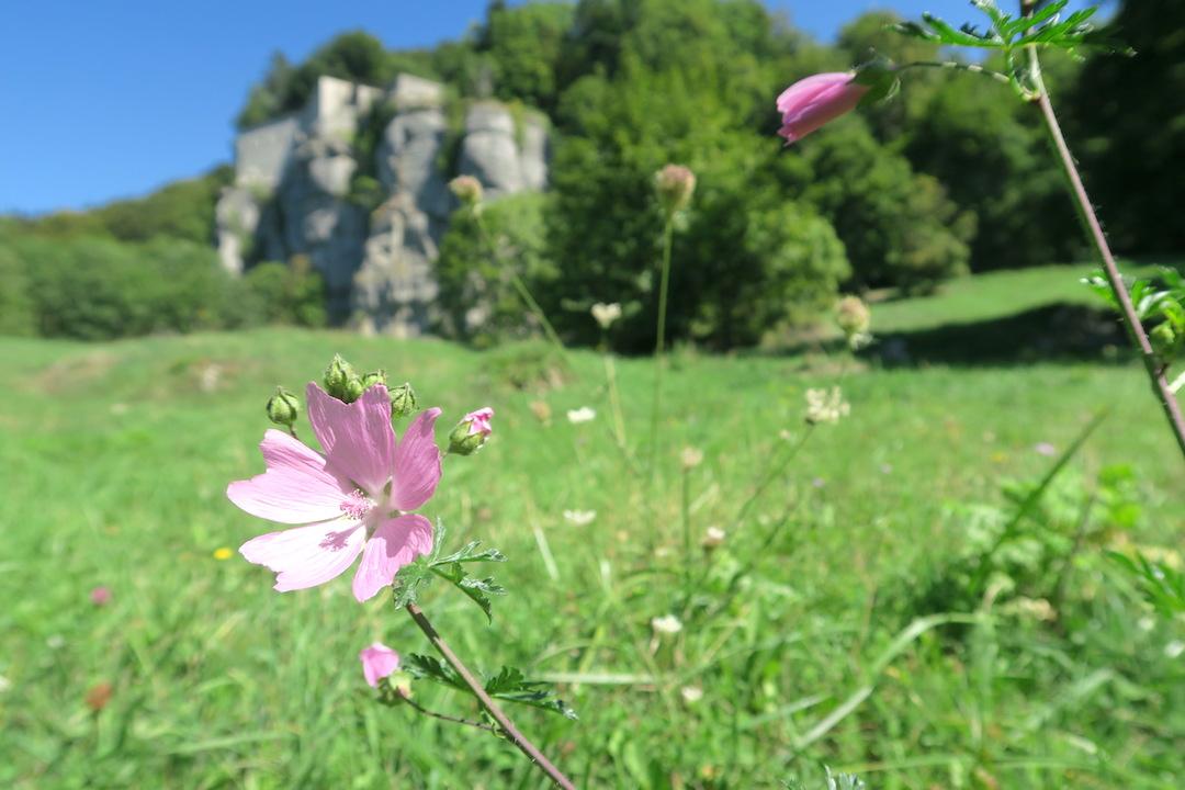ラヴェルナの緑の森にも秋の足音_f0234936_6145693.jpg