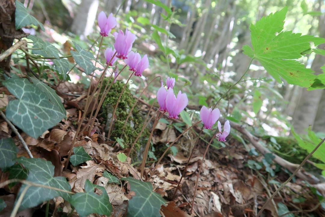 ラヴェルナの緑の森にも秋の足音_f0234936_630119.jpg