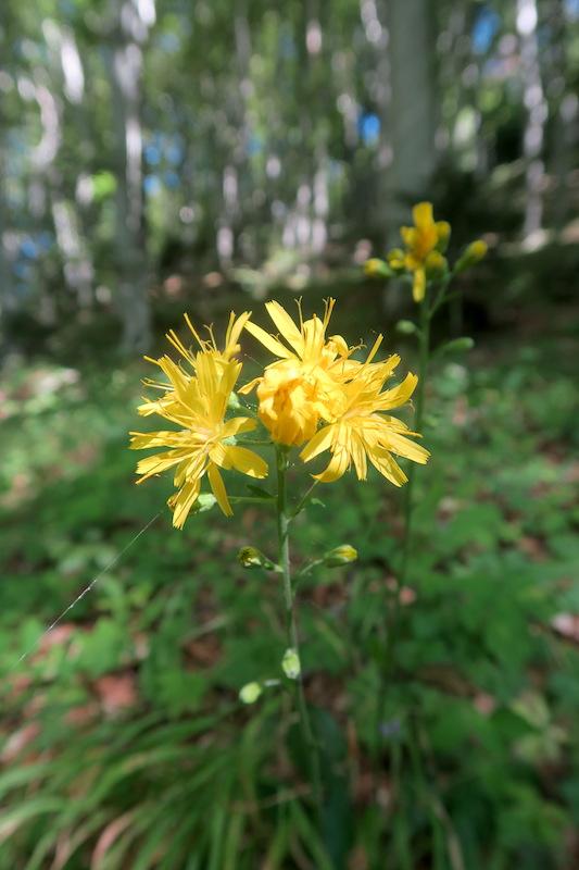 ラヴェルナの緑の森にも秋の足音_f0234936_6335267.jpg